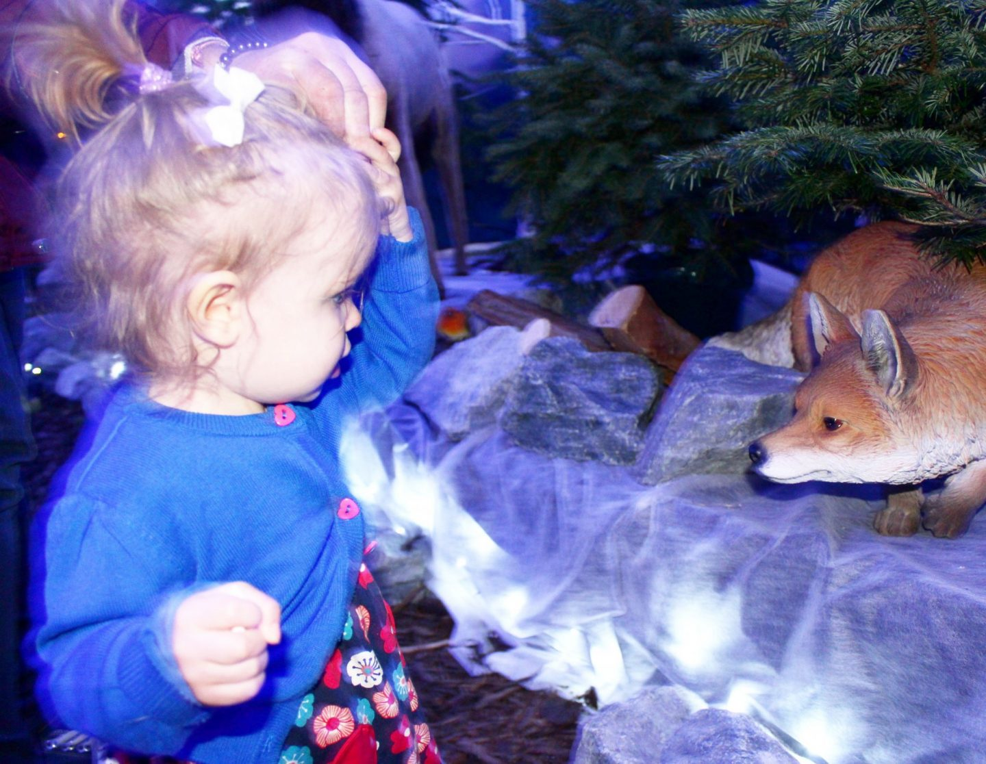 Photo Diary | Christmas at Dobbies